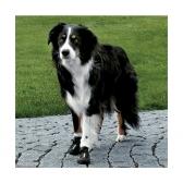 Bottes Walker Active pour chien