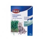 Graines pour herbes à chats